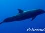 Karibik Meeressäuger