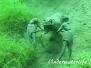 Europa Süßwasser Krustentiere-Crustacea-Crustaceans