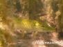 Europa Süßwasser Fische-Pisces-fish