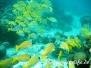 Indik Fische-Pisces-fish