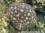 Indik Wirbellose-Invertebrata-Invertebrates