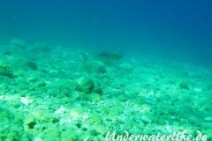 Atlantischer-Eidechsenfisch-Dubrovnik-2015-05