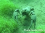 Edelkrebs (Astacus astacus)