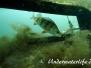Europa Süßwasser Barschartige-Perciformes-perch-likes