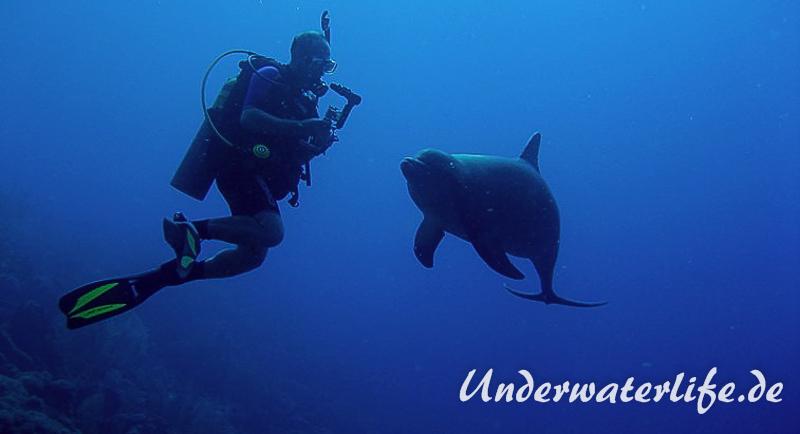 Delfin_adult-Karibik-2014-017