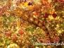 Gestreifter Schleimfisch (Parablennius gattorugine)