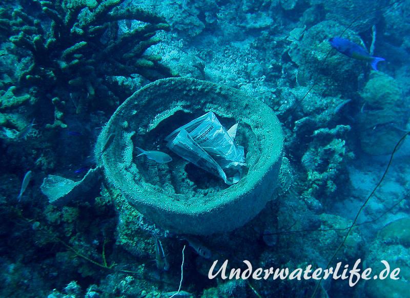 Grosser Vasenschwamm_adult-Karibik-2014-003