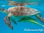 Grüne Meeresschildkröte (Chelonia mydas) Indik