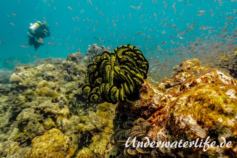 Faszinierende Unterwasserwelten