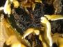 Korkenzieheranemone (Bartholomea annulata)