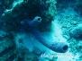 Karibik Schwämme-Porifera-sponges