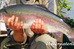 Regenbogenforelle-2005-04-001