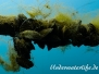 Europa Süßwasser Muscheln-Bivalvia-shell